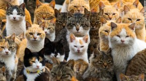 Cats Curtis Bausse Short Story Competition