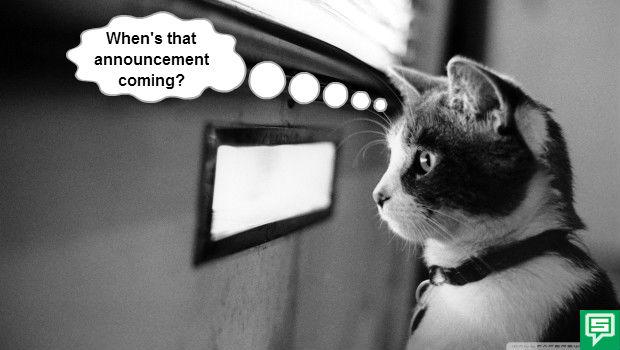 waiting-cat